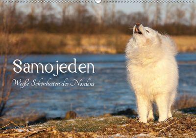 Samojeden - Liebenswerte Fellkugeln (Wandkalender 2019 DIN A2 quer), Tierpfoto Annett Mirsberger