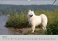 Samojeden - Liebenswerte Fellkugeln (Wandkalender 2019 DIN A2 quer) - Produktdetailbild 7