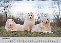 Samojeden - Liebenswerte Fellkugeln (Wandkalender 2019 DIN A2 quer) - Produktdetailbild 10