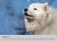Samojeden - Liebenswerte Fellkugeln (Wandkalender 2019 DIN A2 quer) - Produktdetailbild 8