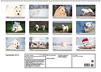 Samojeden - Liebenswerte Fellkugeln (Wandkalender 2019 DIN A2 quer) - Produktdetailbild 13