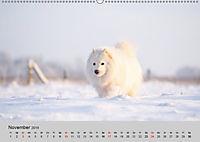 Samojeden - Liebenswerte Fellkugeln (Wandkalender 2019 DIN A2 quer) - Produktdetailbild 11