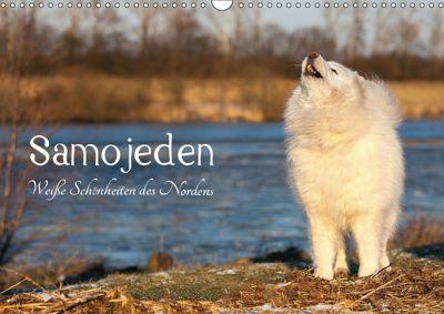 Samojeden - Liebenswerte Fellkugeln (Wandkalender 2019 DIN A3 quer), Tierpfoto Annett Mirsberger