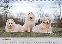 Samojeden - Liebenswerte Fellkugeln (Wandkalender 2019 DIN A3 quer) - Produktdetailbild 10