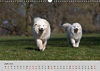Samojeden - Liebenswerte Fellkugeln (Wandkalender 2019 DIN A3 quer) - Produktdetailbild 6