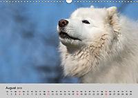 Samojeden - Liebenswerte Fellkugeln (Wandkalender 2019 DIN A3 quer) - Produktdetailbild 8