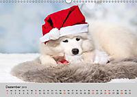 Samojeden - Liebenswerte Fellkugeln (Wandkalender 2019 DIN A3 quer) - Produktdetailbild 12