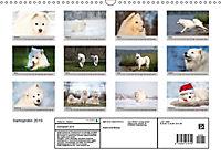 Samojeden - Liebenswerte Fellkugeln (Wandkalender 2019 DIN A3 quer) - Produktdetailbild 13