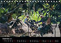 Santo Antao, Perle der Kapverden (Tischkalender 2019 DIN A5 quer) - Produktdetailbild 12