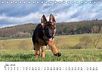 Schäferhund Yack wird erwachsen (Tischkalender 2019 DIN A5 quer) - Produktdetailbild 7