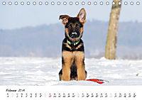 Schäferhund Yack wird erwachsen (Tischkalender 2019 DIN A5 quer) - Produktdetailbild 2