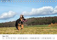 Schäferhund Yack wird erwachsen (Tischkalender 2019 DIN A5 quer) - Produktdetailbild 3