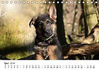 Schäferhund Yack wird erwachsen (Tischkalender 2019 DIN A5 quer) - Produktdetailbild 4