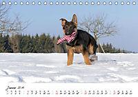 Schäferhund Yack wird erwachsen (Tischkalender 2019 DIN A5 quer) - Produktdetailbild 1