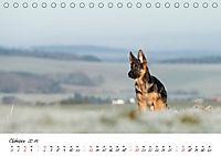 Schäferhund Yack wird erwachsen (Tischkalender 2019 DIN A5 quer) - Produktdetailbild 10