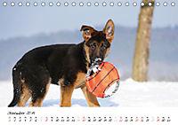 Schäferhund Yack wird erwachsen (Tischkalender 2019 DIN A5 quer) - Produktdetailbild 12