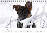 Schäferhund Yack wird erwachsen (Tischkalender 2019 DIN A5 quer) - Produktdetailbild 11