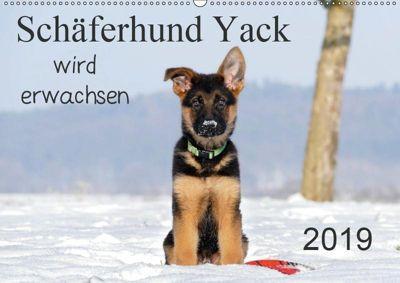 Schäferhund Yack wird erwachsen (Wandkalender 2019 DIN A2 quer), Petra Schiller