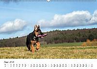 Schäferhund Yack wird erwachsen (Wandkalender 2019 DIN A2 quer) - Produktdetailbild 3