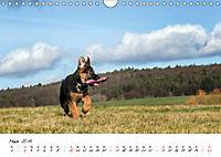 Schäferhund Yack wird erwachsen (Wandkalender 2019 DIN A4 quer) - Produktdetailbild 3