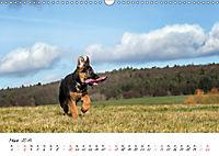 Schäferhund Yack wird erwachsen (Wandkalender 2019 DIN A3 quer) - Produktdetailbild 3