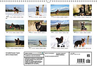 Schäferhund Yack wird erwachsen (Wandkalender 2019 DIN A3 quer) - Produktdetailbild 13