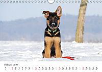 Schäferhund Yack wird erwachsen (Wandkalender 2019 DIN A4 quer) - Produktdetailbild 2