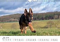 Schäferhund Yack wird erwachsen (Wandkalender 2019 DIN A4 quer) - Produktdetailbild 7