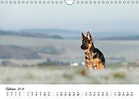 Schäferhund Yack wird erwachsen (Wandkalender 2019 DIN A4 quer) - Produktdetailbild 10