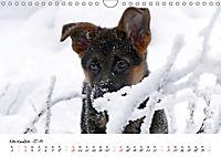 Schäferhund Yack wird erwachsen (Wandkalender 2019 DIN A4 quer) - Produktdetailbild 11