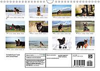 Schäferhund Yack wird erwachsen (Wandkalender 2019 DIN A4 quer) - Produktdetailbild 13
