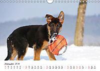Schäferhund Yack wird erwachsen (Wandkalender 2019 DIN A4 quer) - Produktdetailbild 12