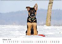 Schäferhund Yack wird erwachsen (Wandkalender 2019 DIN A2 quer) - Produktdetailbild 2
