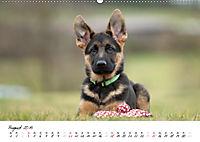Schäferhund Yack wird erwachsen (Wandkalender 2019 DIN A2 quer) - Produktdetailbild 8