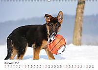 Schäferhund Yack wird erwachsen (Wandkalender 2019 DIN A2 quer) - Produktdetailbild 12