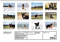Schäferhund Yack wird erwachsen (Wandkalender 2019 DIN A2 quer) - Produktdetailbild 13