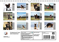 Schäferhund Yack wird erwachsenCH-Version (Wandkalender 2019 DIN A4 quer) - Produktdetailbild 13