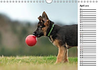 Schäferhund Yack wird erwachsenCH-Version (Wandkalender 2019 DIN A4 quer) - Produktdetailbild 4