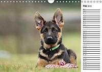 Schäferhund Yack wird erwachsenCH-Version (Wandkalender 2019 DIN A4 quer) - Produktdetailbild 5