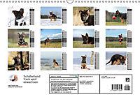 Schäferhund Yack wird erwachsenCH-Version (Wandkalender 2019 DIN A3 quer) - Produktdetailbild 13