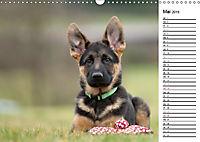 Schäferhund Yack wird erwachsenCH-Version (Wandkalender 2019 DIN A3 quer) - Produktdetailbild 5