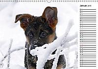 Schäferhund Yack wird erwachsenCH-Version (Wandkalender 2019 DIN A3 quer) - Produktdetailbild 1