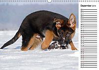 Schäferhund Yack wird erwachsenCH-Version (Wandkalender 2019 DIN A3 quer) - Produktdetailbild 12