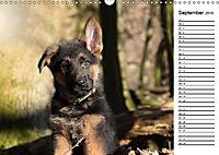 Schäferhund Yack wird erwachsenCH-Version (Wandkalender 2019 DIN A3 quer) - Produktdetailbild 9