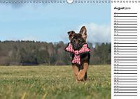 Schäferhund Yack wird erwachsenCH-Version (Wandkalender 2019 DIN A3 quer) - Produktdetailbild 8