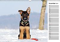 Schäferhund Yack wird erwachsenCH-Version (Wandkalender 2019 DIN A3 quer) - Produktdetailbild 11
