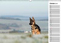 Schäferhund Yack wird erwachsenCH-Version (Wandkalender 2019 DIN A3 quer) - Produktdetailbild 10