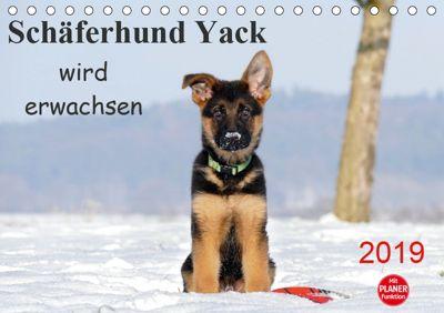 Schäferhund Yack wird erwachsenCH-Version (Tischkalender 2019 DIN A5 quer), Petra Schiller