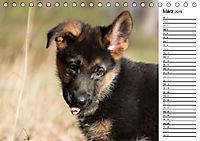Schäferhund Yack wird erwachsenCH-Version (Tischkalender 2019 DIN A5 quer) - Produktdetailbild 3