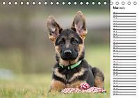 Schäferhund Yack wird erwachsenCH-Version (Tischkalender 2019 DIN A5 quer) - Produktdetailbild 5